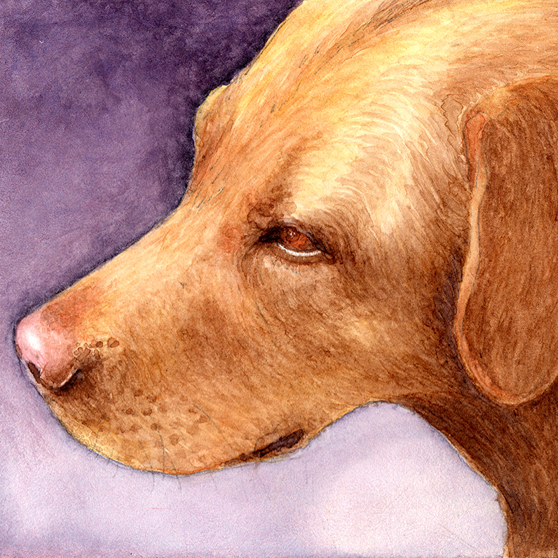 Abby Labby Watercolor and Pencil