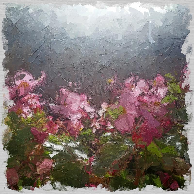 Painterly Pinks